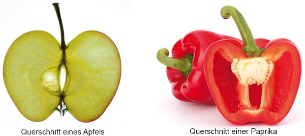 Torus field of an apple and torus field of a pepper
